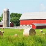 Farm (photo)